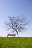 Bench , bare single tree Royalty Free Stock Photography