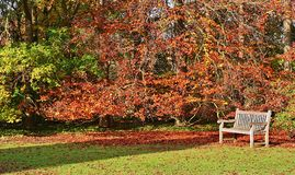 Bench with a beautiful woodland royalty free stock photos