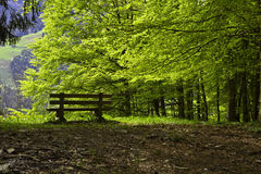 Bench in a beech forest Stock Photo