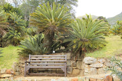 Bench beneath cycads in Kirstenbosch Royalty Free Stock Photography