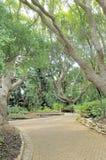 Bench beneath trees in Kirstenbosch Stock Image