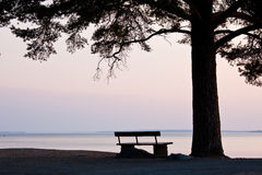 Bench and big tree at the beach silhouette Royalty Free Stock Images