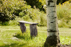 Bench of the birch Royalty Free Stock Images