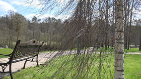 Bench, birch tree and lightings near park path in spring. 4K stock video footage