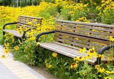 Bench with black-eyed susan Royalty Free Stock Photo