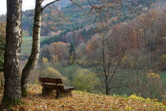 Bench in the Black Forest Stock Image