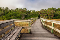 Bench and a boardwalk in the wetlands of Everglades National Par Stock Photography