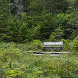 Bench in a Bog. A wood weather bench provides respite to view the wildflowers of an Alaskan bog Stock Image