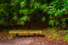 Bench and bushes along a trail Royalty Free Stock Photography