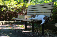 Bench and cat of the park. The bench of the park of the day when it was fine and the cat which sleeps Royalty Free Stock Photo