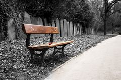 Bench in cemetery. Red rose on a bench in a cemetery Royalty Free Stock Photos