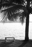 Bench chair and coconut tree Stock Photography
