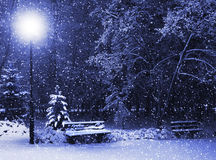 Bench, christmastree and lantern royalty free stock photo