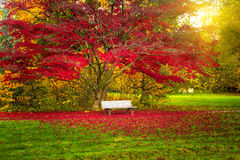 Bench in a city park. Royalty Free Stock Images