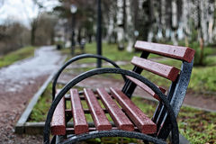 Bench in the city in spring Stock Image