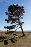 Bench at the coast. Bench and a tree at the windy coast in Southern Sweden Royalty Free Stock Photos