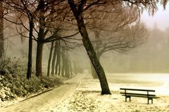 Bench, Cold, Dawn Royalty Free Stock Photo