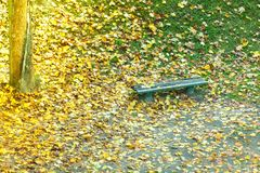 Bench and colorful maple leaves in city park Royalty Free Stock Image