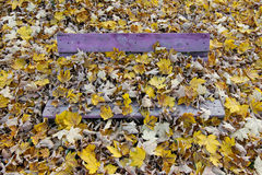 Bench covered in fallen leaves Royalty Free Stock Photography
