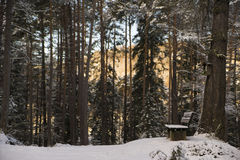Bench in a dark forest. With sunny mountains in the back Royalty Free Stock Image