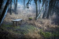 A bench deep in the woods, past the dry grass. In the autumn rain Stock Image