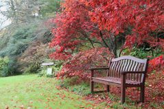 Bench of dreamers. Alley with yellow and red leaves. under a large red bush a bench covered with red leaves in autumn in the Foliage Path, leading to the very Stock Image