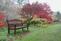 Bench of dreamers.  Autumn in Wicklow, Ireland. Bench of dreamers. Alley with yellow and red leaves. under a large red bush a bench covered with red leaves in Stock Photo