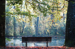 Bench with a duck. A very special atmosphere in autumn at a lake with a bench and a duck Royalty Free Stock Photos