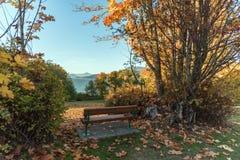 Bench en el parque, entre los arbustos y los árboles, en hierba verde con Foto de archivo