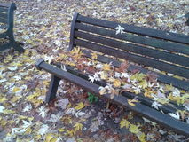 Bench end leaves Royalty Free Stock Image