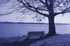 bench ensamt Arkivfoto