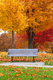 Bench in Fall foliage stock images