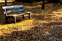 Bench And Fall Leaves Royalty Free Stock Photos
