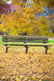 Bench and Fall Leaves in the Park Royalty Free Stock Photo