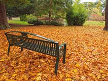 Bench in the fall park Royalty Free Stock Photography