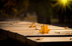Bench with fallen leaves Royalty Free Stock Photo