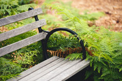 Bench and Ferns. Relaxing bench surrounded by ferns stock photo