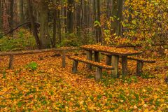 Tricity Landscape Park. Bench filled with leaves on a rainy autumn day in the Tricity Landscape Park, Gdansk, Poland Stock Image