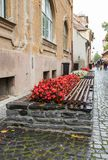 A bench and flower bed with flowers in a  rainy day in Sibiu city in Romania. A bench and flower bed with flowers in a rainy day in Sibiu city in Romania Stock Photography