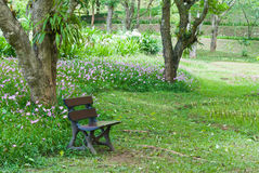 Bench in the flower garden. Royalty Free Stock Images