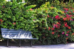 Bench in flower garden. A peaceful garden with a bench in front of bougainvillea flowers in Butterfly World, South Florida Royalty Free Stock Image