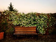Bench in flower. Bench in south of Italy Royalty Free Stock Photography