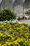 Bench and flowers. A bench surrounded by flowers royalty free stock image