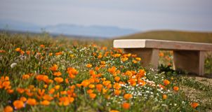 Bench flowers Royalty Free Stock Images