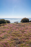 The bench between the flowers, Monterey Royalty Free Stock Photos