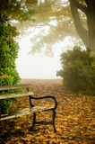 A Park Bench in Fog. A park bench in the midst of very thick fog in autumn. Dead leaves scattered around the scene in a park Stock Photography