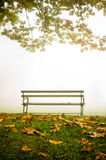 A Park Bench in Fog. A park bench in the midst of very thick fog in autumn. Dead leaves scattered underneath a tree on the lawn Royalty Free Stock Images