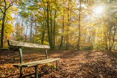 Bench in Fontainebleau forest. In autumn Stock Image