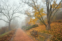 Bench and footpath in an autumn Royalty Free Stock Photography