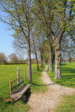 Bench and footpath through chestnut alley, springtime Stock Photo